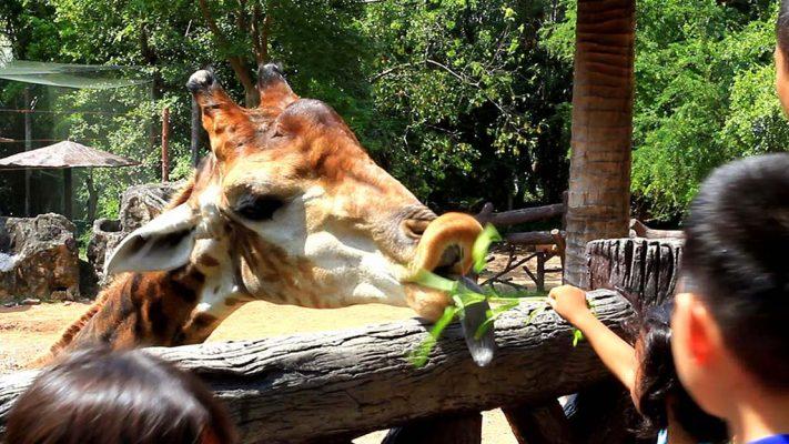 Dusit Zoo.