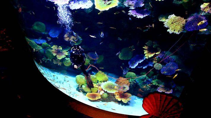 Sea Life Bangkok Ocean World.