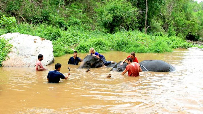 Elephants in the river with visitors.
